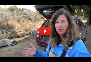 Saving wild trout: Suzanne Huhta explains