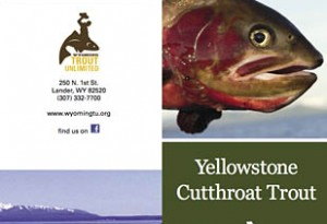 Wyoming Trout Unlimited YL Cutthroat Project