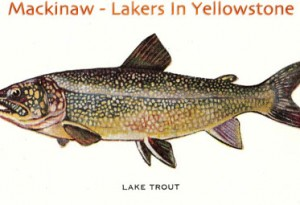 Yellowstone Lake and Lake Trout - US Bureau of Fisheries-Book